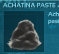 Achatina Paste × 10000 ,PC PVE New Offcial server